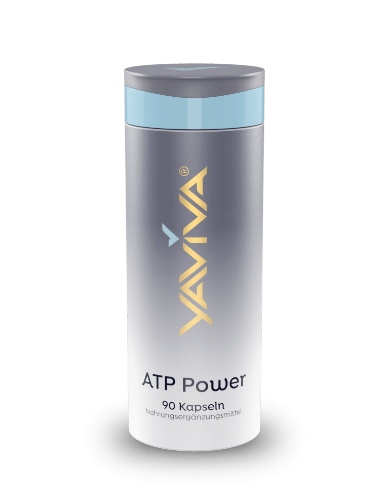 ATP : Energielieferant für die Zellen
