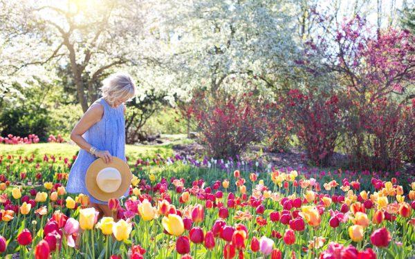 Tulpen - Frühling aktiv